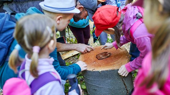 A group of primary school children stand around a tree stump. One child and an adult point to the rings.