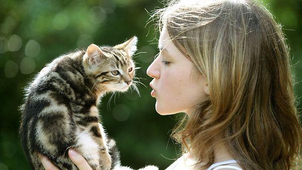 Ein junges Mädchen hält ein Maincoon Kitten in ihren Händen.